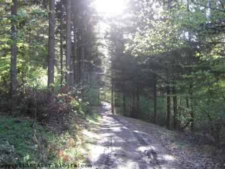 جاده جنگلی گرک پس در کلاردشت